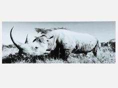 Obraz Rhino — Obrazy — KARE® Design
