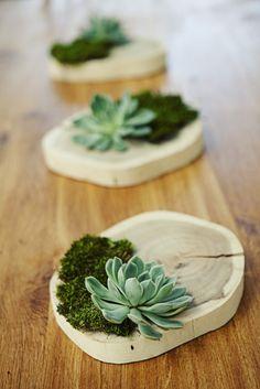 slice of wood, bit of moss, succulent  **********************************************   (repin) #succulent #moss #plants - ≈√