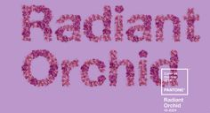 Pantone escolhe 'Orquídea Radiante' como a cor de 2014 - http://marketinggoogle.com.br/2013/12/19/pantone-escolhe-orquidea-radiante-como-a-cor-de-2014/