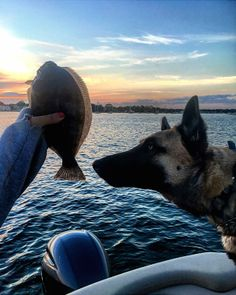 You can't beat a day of fishing in a Benny with your best friend by your side. Thanks for sharing Kristin Serra.