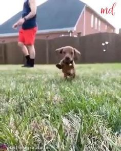 Basset Hound Dog, Dachshund Dog, Dachshunds, Funny Dogs, Funny Animals, Cute Animals, Famous Dogs, American Cocker Spaniel, Great Dane Dogs