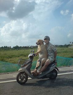 50 Unexplainable Photos Of Dogs