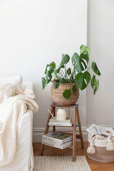 13 Big Leaf Houseplants That Make a Statement Indoor Palm Trees, Indoor Palms, Big Leaf Plants, Trees To Plant, Calathea Orbifolia, Types Of Houseplants, Elephant Ear Plant, Succulent Soil, Banana Plants