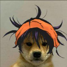 dog with hat jojo - risotto in 2020   Jojo's bizarre ...