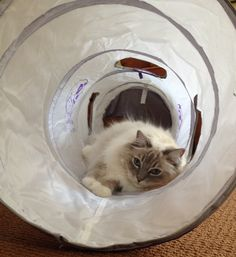 Pets Can Play Ultimate Cat Tunnel Product Review http://www.floppycats.com/pets-can-play-ultimate-cat-tunnel-product-review.html