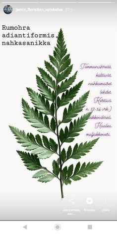 Plant Identification, Planting Flowers, Plant Leaves, Plants, Flora, Plant