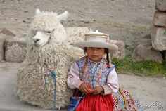 Chivay, Peru - Peruvian little girl in traditional clothing with alpaca