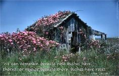 """""""We can complain because rose bushes have thorns, or rejoice because thorn bushes have roses."""" ~ Abe Lincoln"""