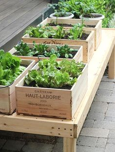 Wine box raised garden planters Creating DIY raised garden beds, or garden boxes, in your backyard is a great way to protect your veggies, herbs, and flowers Small Herb Gardens, Small Vegetable Gardens, Vegetable Garden Design, Small Space Gardening, Small Garden Design, Balcony Gardening, Vegetable Gardening, Apartment Gardening, Vegetables Garden