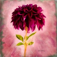 dahlia-digital-encaustic-final