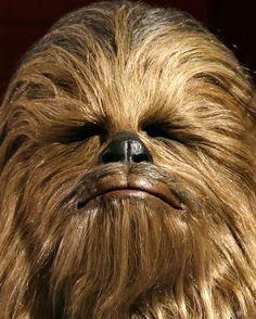 Chewbacca (Peter Mayhew)   Así es como luce ahora el elenco original de Star Wars