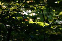 Der #Herbst beginnt - #Wandern durch die #Natur bei #München