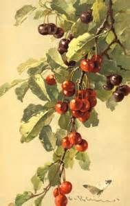 catherine klein vegetables - Bing Images