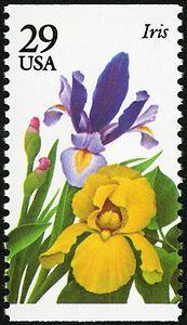 29c Iris single