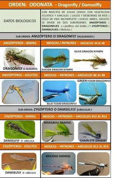 """Insects and their representations for fly fishing ! Trout Fishing, Fishing Lures, Fishing Hook Knots, Fly Fishing Nymphs, Fly Tying Tools, Fish Drawings, Fly Tying Patterns, Deep Sea Fishing, Fish Camp"