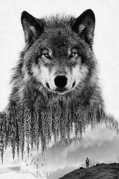 wolf tattoo design wolf tattoo design Geometric is part of Lotus tattoos Forearm Tat - wolf tattoo design Geometric is part of Timeless wolf of the woods Wolf Tattoos, Animal Tattoos, Wolf Tattoo Design, Wolf Design, Wolf Photos, Wolf Pictures, Free Pictures, Wolf Book, Wolf Tattoo Sleeve
