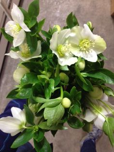 Hellobores in white. Sold in bunches of 10 stems from the Flowermonger the wholesale floral home delivery service.