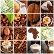 Arabica beans has the better varieties with good acidity and fine fragrance grow in Matagalpa , Jinotega and Nuevo Segovia