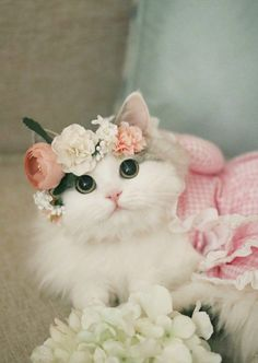 Nice cute cat Fruit can also be used as a dish Romantic birthday cake Gradually understand that happ. Cute Little Kittens, Cute Baby Cats, Cute Cats And Kittens, Kittens Cutest, Cute Dogs, Baby Animals Super Cute, Cute Little Animals, Cute Funny Animals, Beautiful Kittens