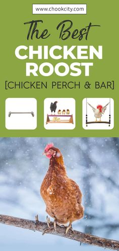 A chicken roost or perching bar is what a chicken would use to sleep upon at night; quite similar to a tree branch in the wild. Chickens love to roost on the highest part of the coop but you can place a chicken roost anywhere. Check out the best chicken roost that you can buy today. . . . #ChookCity #Chicken #RaiseChickens #BackyardChickens #UrbanGarden #UrbanHomestead #Homestead #ChickenLove #Chickenlife #FarmLife #Chickens #ChickenRoost #ChickenPerch&Bar Fancy Chickens, Raising Backyard Chickens, Urban Chickens, Pet Chickens, Chicken Perches, Chicken Feeders, Chicken Facts, Chicken Life, Chicken Breeds For Eggs
