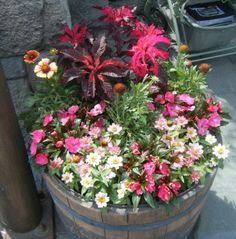 photos of container flowers - Google Search