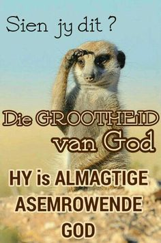 Grootheid Goeie Nag, Afrikaans Quotes, Prayer Board, True Words, Embedded Image Permalink, Christian Quotes, Picture Quotes, Psalms, Good Morning