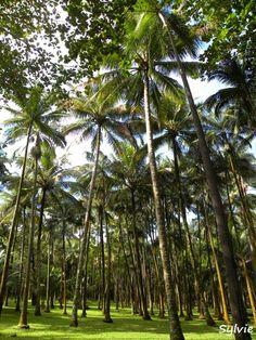 L'Anse des Cascades / Ile de la Réunion https://www.hotelscombined.com/?a_aid=150886