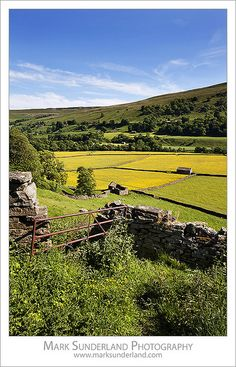 Summer Meadows at Gunnerside in Swaledale Yorkshire Dales England