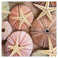 Art Print: Starfish