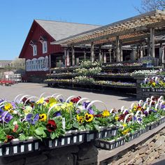 garden centers rochester ny. Waysside #GardenCentre Is A Hi-tech Nursery Known For Growing Both Indigenous As Well Garden Centers Rochester Ny