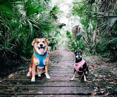 Bear Creek Nature Trail   1555 Winter Springs Blvd., Winter Springs Travel around ancient cypress, oak and palms as you and your dog can hike this nearly mile-long trail. Photo via timamirzadeh/Instagram