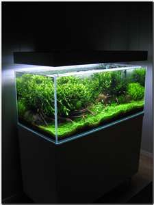 Image Search Results For Low Aquarium Plants Big Aquarium, Aquarium Garden,  Nature Aquarium,