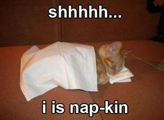 This Is Why We Call Them Napkins - Funny Animal Quotes - - This Is Why We Call Them Napkins cute animals cat cats adorable animal kittens pets kitten funny pictures funny animals funny cats Funny Cats And Dogs, Cute Cats And Kittens, Kittens Cutest, Kittens Meowing, Funny Animal Pictures, Funny Animals, Cute Animals, Baby Animals, Arctic Animals