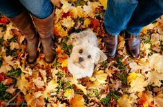 Fall Engagement Photography, Autumn Engagement Photos, dog playing in leaves. Engagement Session with Puppy. http://rachelsmithphotography.com/blog/autumn-sessions-maryland/