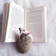 This little hedgehog must love reading. Baby Animals Pictures, Cute Animal Photos, Animals And Pets, Cute Animal Memes, Cute Funny Animals, Cute Dogs, Super Cute Animals, Cute Little Animals, Baby Hedgehog