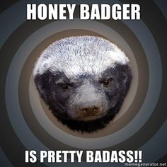This is the honey badger...