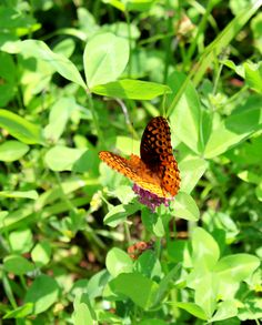 Butterfly in Shenandoah National Park - snapped by Heather L Rizzo