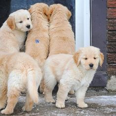OMG I THOUGHT THE PUPPIES ON THE FAR LEFT WHERE ONE DOG...ALL HAIL THE CATTERPILLAR DOG!
