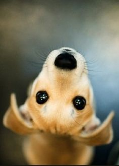 Adorable cute little puppy looking upward.... click on picture to see more