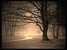 Schoenberg: Verklärte Nacht ( Full ) - Karajan* Dehmel's poem describes a man and a woman walking through a dark forest on a moonlit night, wherein the woman shares a dark secret with her new lover: Anais Nin, Nocturne, Night Photography, White Photography, Photography Tips, Shadow Photography, Monochrome Photography, Amazing Photography, Death Cab For Cutie