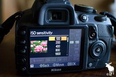 Nikon tips for beginners for shooting landscapes