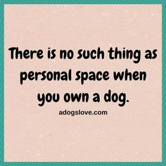 Lol, it's all their space. They want where your face is? You have a big bed they want? Ok, you can have a small corner. So true I Love Dogs, Puppy Love, All Dogs, Dogs And Puppies, Doggies, Dachshund, Pekinese, Dog Rules, Crazy Dog