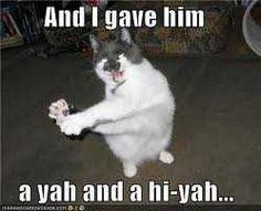 Kung-fu Fighting Cat