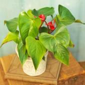 Make your indoor gardening simple by choosing any of these durable, easy-to-grow plants.