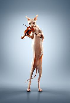 hairless sphinx playing violin | Photography by Alexei Sovertkov