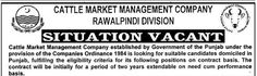 #Jobs in Cattle Market Management Company for Managing Director, Chief Financial Officer