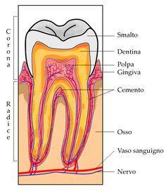#Devilitalizzare #dente ….. ecco i motivi , i modi e tutte le curiosità … #viteniamoinformati #dentista #salute