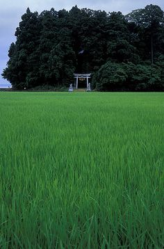 Rice field and Torii shinto shine archway Noto, Ishikawa, Japan Samurai, Aesthetic Japan, Ishikawa, Prado, Plein Air, Japanese Culture, Japan Travel, Aesthetic Pictures, Countryside