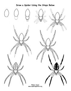 Spider (Garden) Drawing Lesson