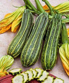 zucchini. Badocs , flors de Carabasso.